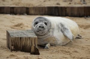winterton-seals-1