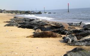 winterton-seals-3