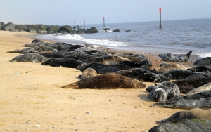 winterton-seals-3